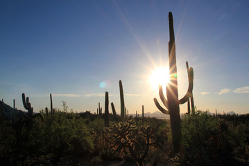 Sunset Over Saguaro National Park, Tucson, Arizona, USA