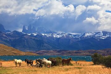 Ashore are grazed herd of horses