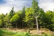 area boschiva