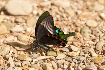 butterfly, nature butterfly catching waterfall stone in forest