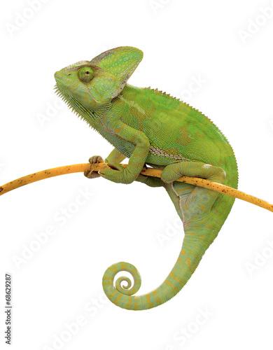 Keuken foto achterwand Kameleon Chamäleon