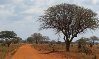 Strada rossa nel parco in kenya