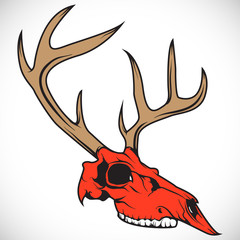 The skull of a deer. Vector.