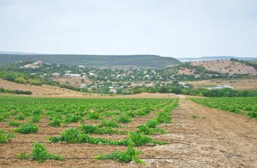 drop irrigation