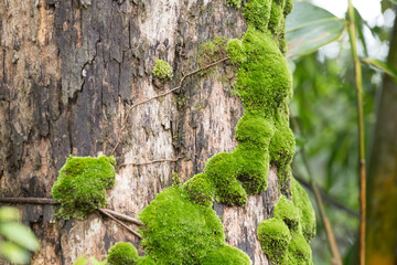 moss on trunk, green moss grows on tree trunk in forest