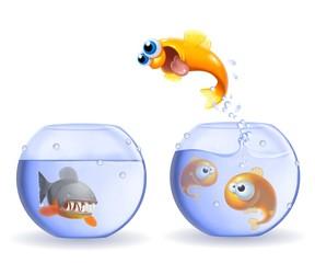 salto del pesce