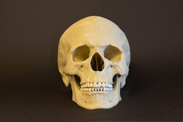 The skull of a man