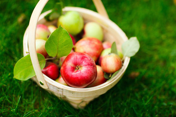 Organic apples in a basket