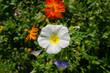 Natur_Wiese_Blume_Sonne_Wasser_17
