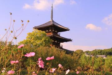 法起寺(奈良)に咲くコスモス