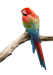 beautiful Parrot, Red-and-green Macaw isolate on white backgroun