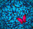canvas print picture - beautiful butterfly background
