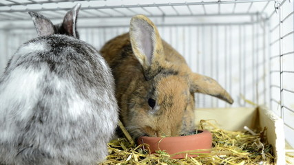 Two Rabbits eating (detailed close-up video)