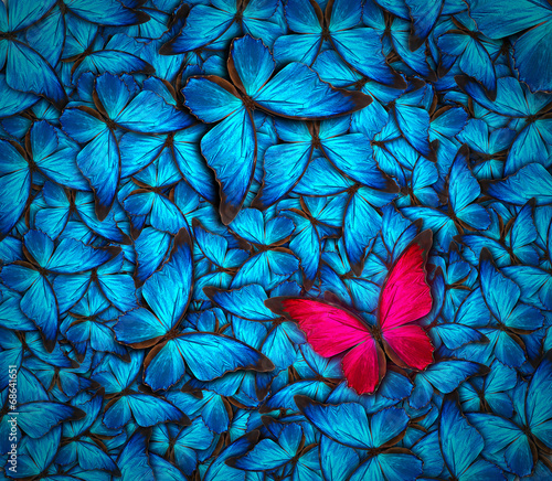 canvas print picture beautiful butterfly background