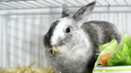 Small grey Rabbit in a  cage (close-up video)