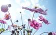 canvas print picture - Sommerblümchen