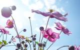 Fototapety Sommerblümchen