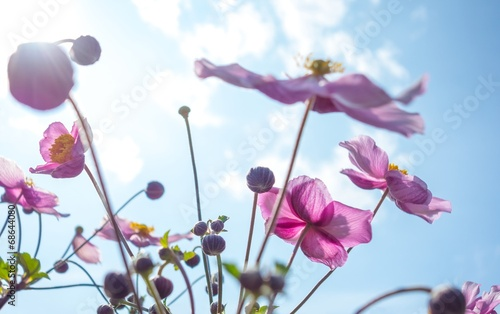 canvas print picture Sommerblümchen
