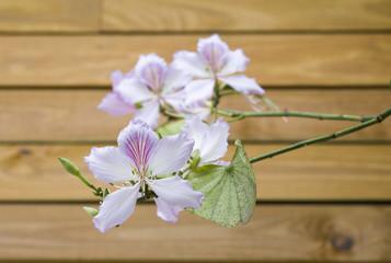 Arranjo floral com pata-de-vaca