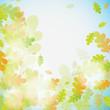 Obrazy na płótnie, fototapety, zdjęcia, fotoobrazy drukowane : Oak autumn background, vector