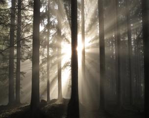 Sonne im Morgennebel im Wald