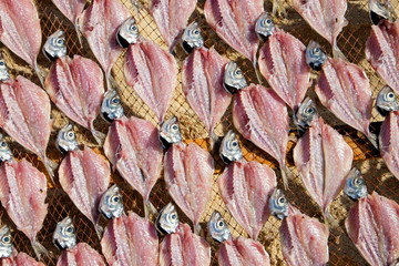 Drying fish in Portugal