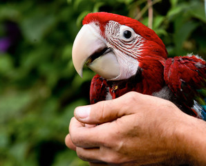 Colorful parrot sitting on human hand