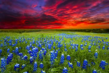 Sunset on Sugar Ridge Road, Ennis, TX