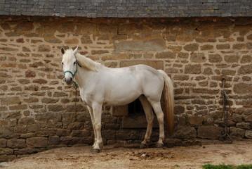 Cheval, Bretagne