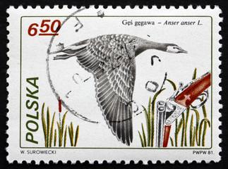 Postage stamp Poland 1981 Greylag Goose, Bird