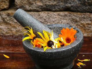 echinacea und ringelblumen