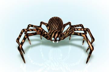 Tiger Widow Spider