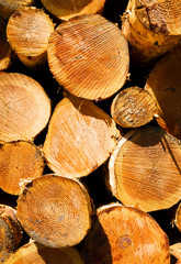 Timber Wood Log Lumber Processing Plant Riverside Columbia River