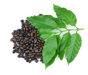 coffee beans with leaves on white background