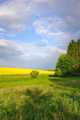 Countryside landscape with yellow rapeseed field