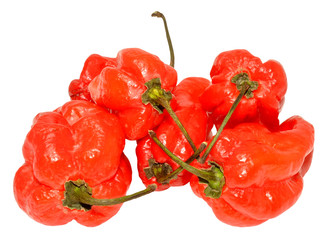Red Scotch Bonnet Peppers