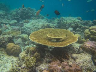 tropical fish in the sea in maldives