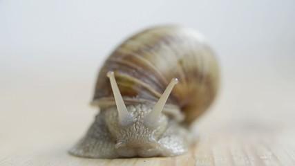 snail on wood