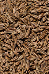 Texture of cumin seeds captured from above. Macro