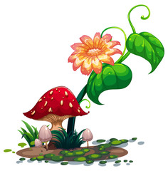 A flowering plant and mushrooms