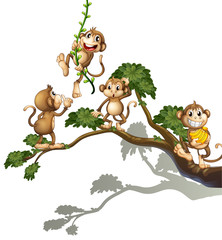 A tree with four monkeys