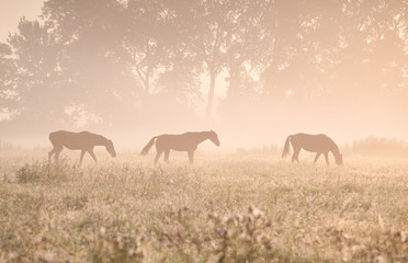 horses in sunshine and fog