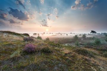 misty sunrise over dunes with flowering heather