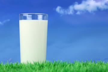 Glas Milch auf einer Wiese mit Textfreiraum