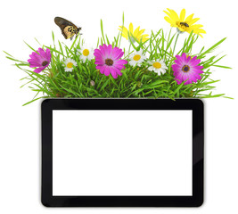 Tablet with blank white screen,grass and flowers