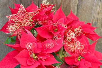 Weihnachtsstern mit Engelshaar