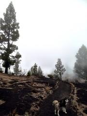 Sendero entre niebla y volcanes