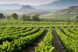 Vineyard, San Vicente de la Sonsierra as background, La Rioja - 68685050