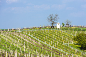 spring vineyards near Nemcicky, Czech Republic