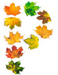 Letter P composed of autumn maple leafs